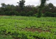Chính chủ cần bán đất tại xã Xuân Phú, huyện Xuân Lộc, tỉnh Đồng Nai