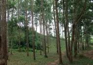 569ha đất trồng cây sản xuất/trang trại/cây dược liệu