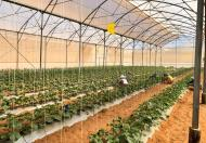 Nam Á Garden - Quỹ đất vàng, hàng ngàn ưu thế