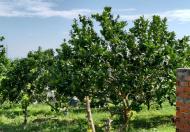 Chính chủ bán gấp lô đất trồng cây ăn quả - Xã Tân Hòa - Huyện Buôn Đôn - Đắk Lắk