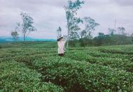 300 triệu - Bán đất Farmstay Bình Thuận, 5000m