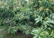Chính chủ bán gấp lô đất vườn 1200m2 giá chỉ 490tr ở Định Quán , Đồng Nai. Lh 0932056011