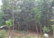 Đất gần ủy ban xã Nhuận Trạch, Lương Sơn 2547m giá chỉ 1.1 triệu/m