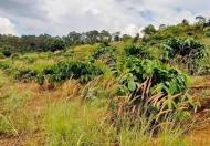 Bán gấp mảnh đất 10ha ở huyện Tuy Đức, tỉnh Đắk Nông