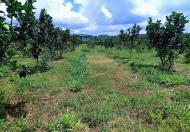 Bán trang trại rộng 5,6ha tại Cẩm Mỹ, Đồng Nai giáp TP.Long Khánh giá 28 tỷ