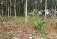 Bán đất rẫy trồng cây giá rẻ ngay đắc nông