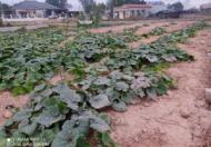 Chính chủ cần bán lô đất tại Phường Đồng Tiến, Phổ Yên, Thái Nguyên.