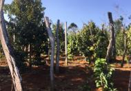 Bán Đất Rẫy Giá Rẻ Tại Thị trấn Quảng Phú, Huyện Cư M'gar, Đắk Lắk