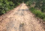 08-F-12-0421-Đất Thủ Thừa - Giá rẻ - LH 0906506516 - Cty Quang Tiến