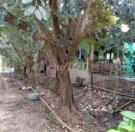 Chính chủ cần bán đất tại Huyện Thanh Bình - Tỉnh Đồng Tháp