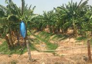Bán dự án thuê đất 50 năm ,hợp đồng 2012 (còn 41 năm).Diện tích 240ha, giá 100tr/ha . Mục đích sử