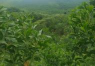 Đất rừng Thanh Sơn, Phú Thọ 200ha, giá 16 tỷ