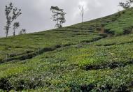 Lô đất đẹp, yên bình gần khu nhiều dịch vụ tại Mộc Châu, khách nghỉ dưỡng nên đầu tư