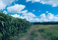 Đất 4000m2 Hẻm Phan Chu Trinh Hồ Mai Thành Bảo Lộc Lâm Đồng
