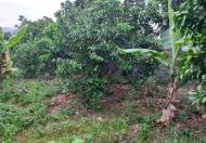 Chính chủ cần cắt bán 2600m2 đất view cánh đồng tại Khánh Thượng - Ba Vì - Hà Nội